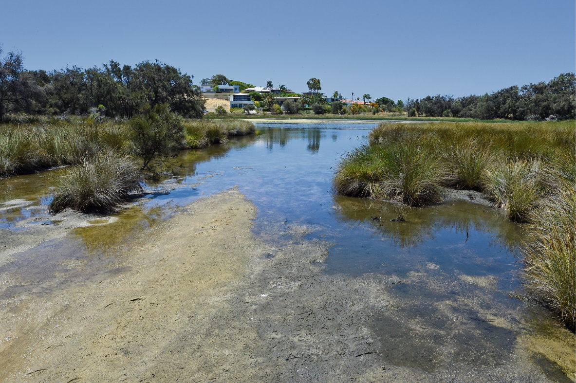 Algal bloom warning for Canning River.