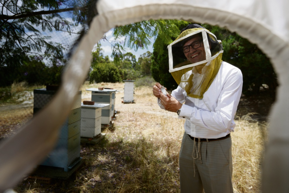 Beekeeper Dean Wood tending to hives at Mt Lawley Golf Course. Picture: Andrew Ritchie        www.communitypix.com.au   d463775