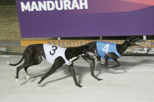 Pepper Fire held out Max Profit to win the Group 3 Birthday Cup on Friday.