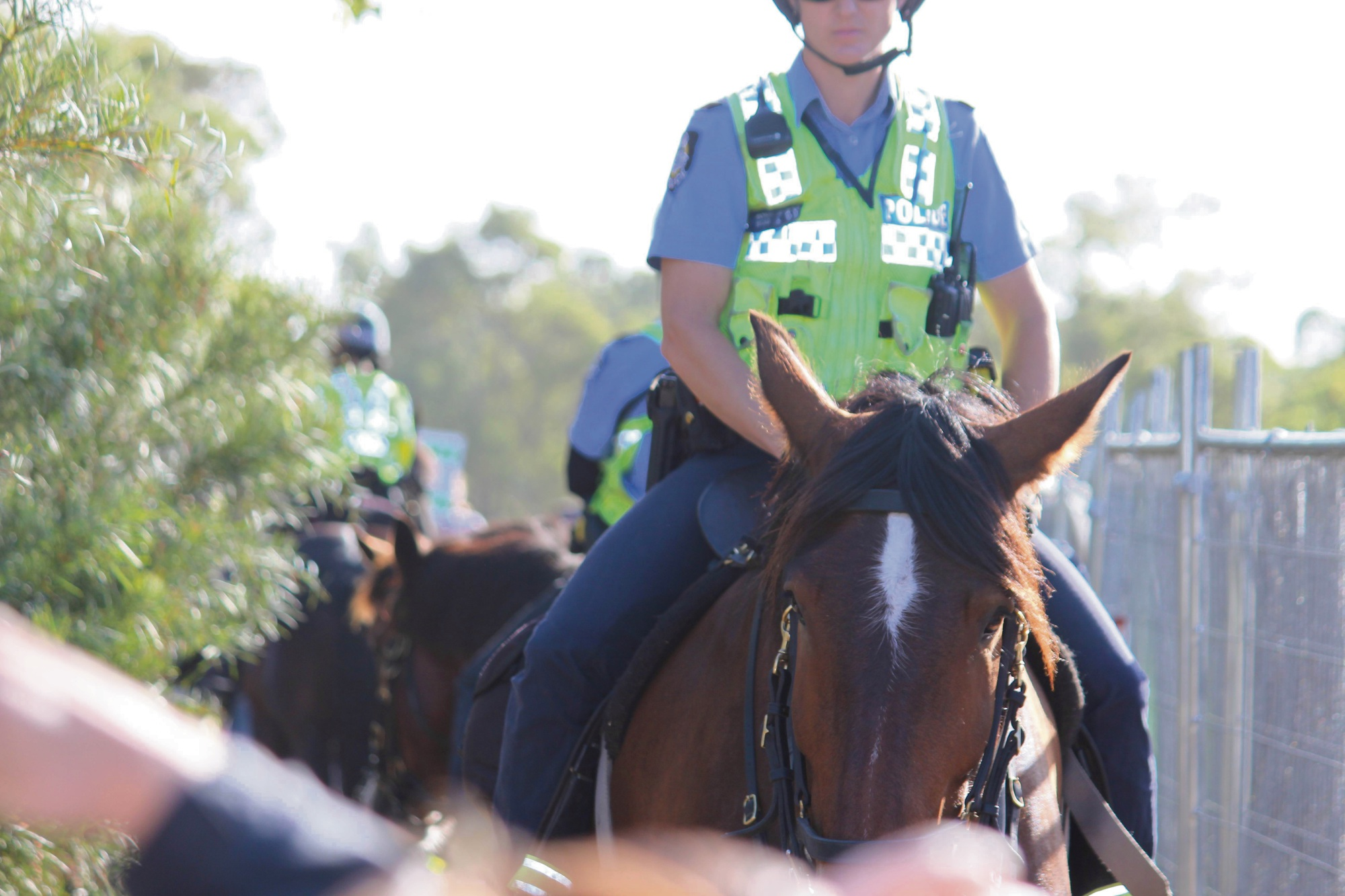 Police horse injured after striking a cable in Bibra Lake