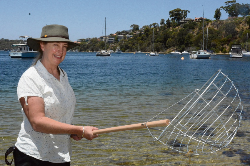 Fisheries' Marion Massam wants pictures of suspect crabs caught in scoops or nets. Picture: Jon Bassett