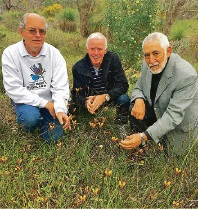 Flora experts David Pike and David Hancock inspecting a grove of donkey orchids with bushwalk host Cr John Chester.