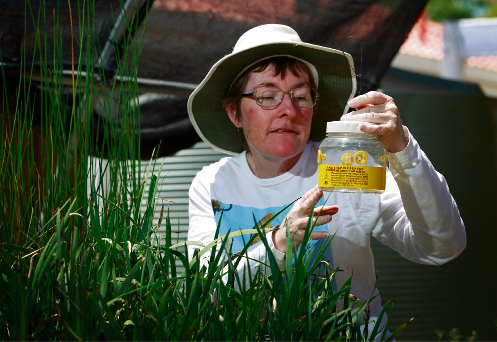 Sian Mawson with a wasp trap. Picture Marie Nirme        d464322