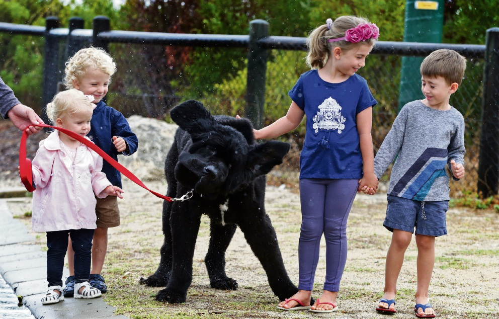 Zara Rogers (1) with her brother Jude Rogers (3) and Olivia Dean (5) and her brother Jacob Dean (3) and Ned  the Newfoundland. Picture: Martin Kennealey www.communitypix.com.au   d464756