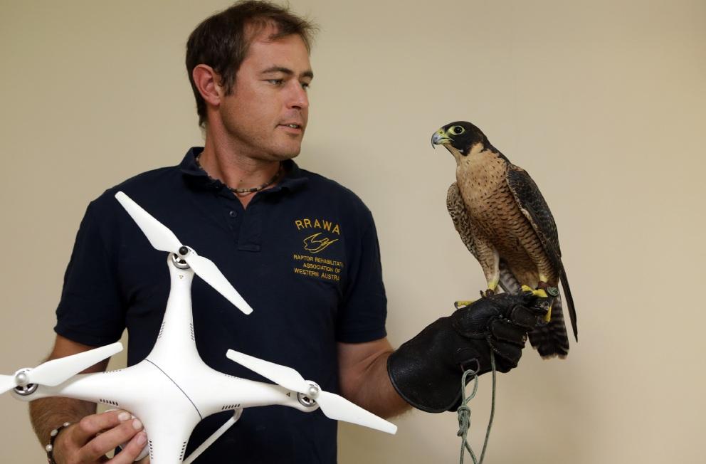 Matthew Lamb with a peregrine falcon.