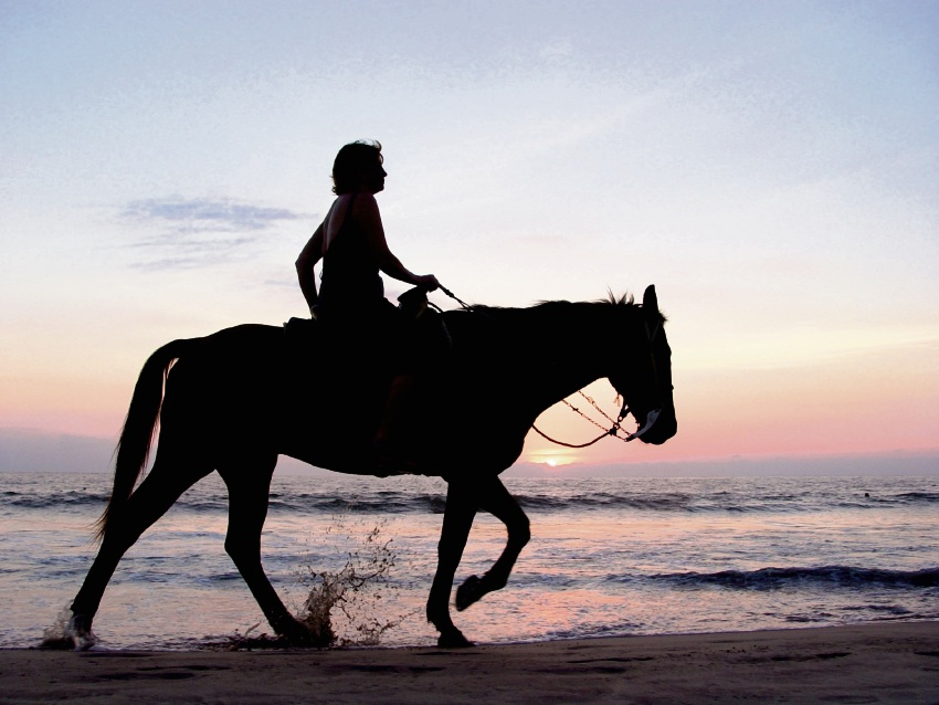 Proposed horse beach for Eglington rejected by Wanneroo Council