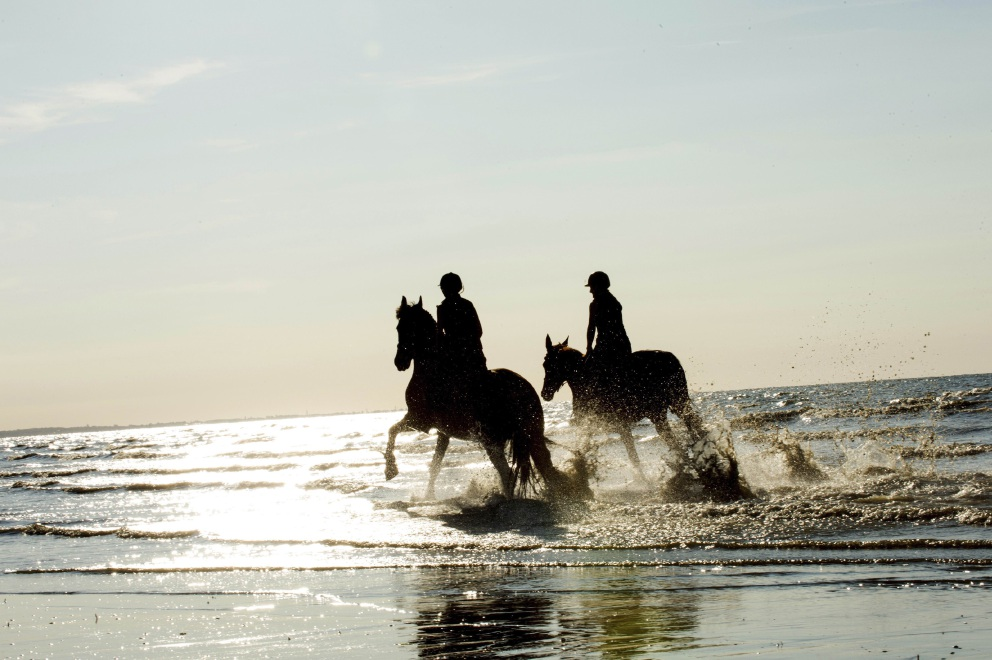 Eglinton: City of Wanneroo report says no to horse beach