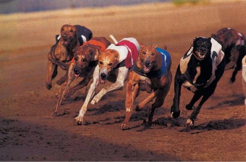 Save a greyhound, please
