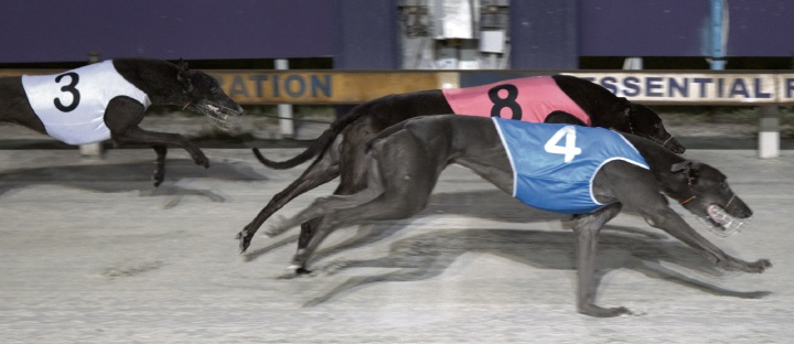 Who's Got Blue winning his heat at Tabtouch Park last Friday evening.