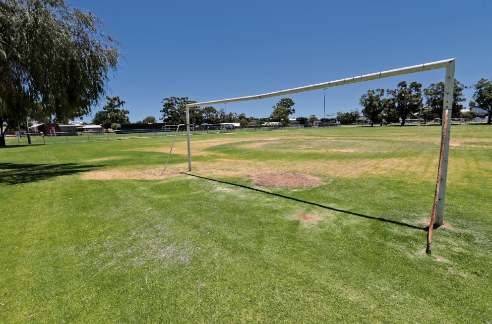 Ashfield Reserve soccer fields. Picture: David Baylis
