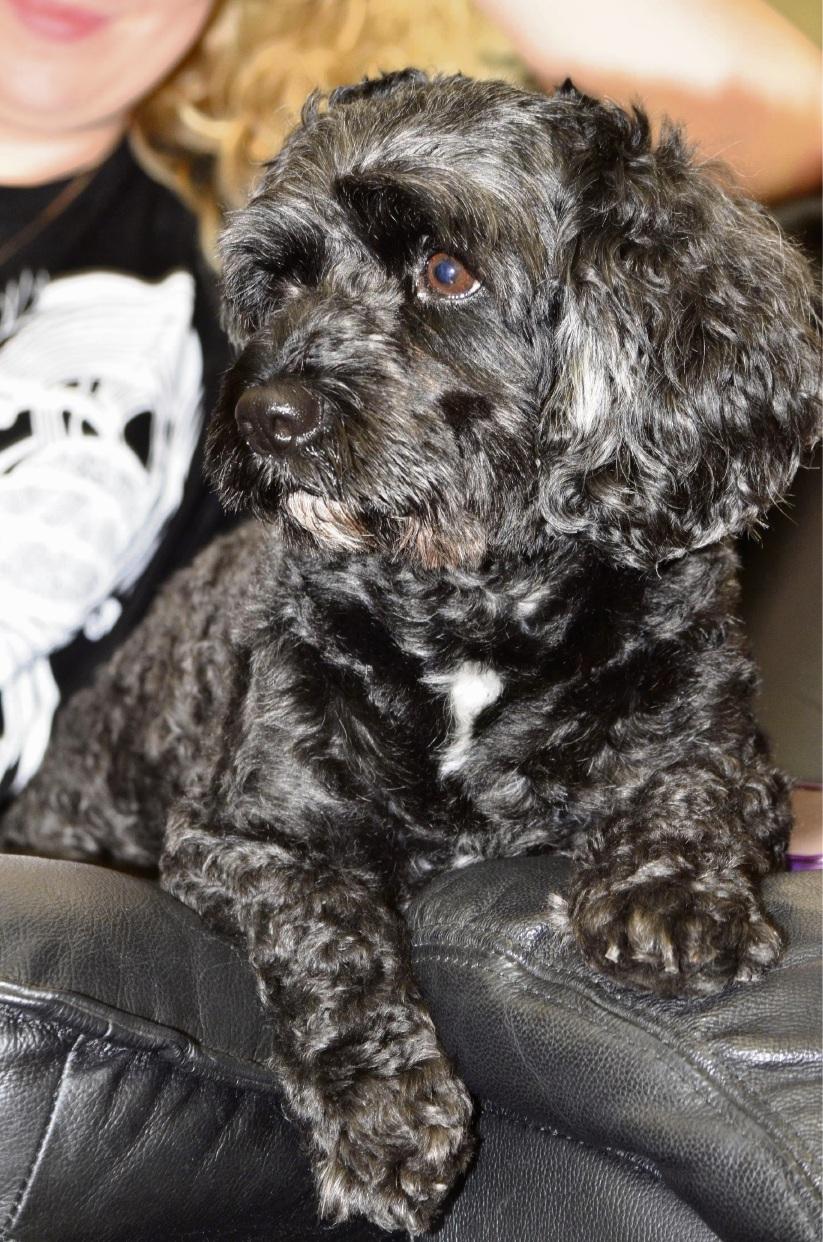 Madeleine McGinnis' dog Chopper died after it was attacked.