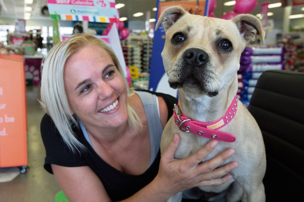 Squirt the staffy finds forever home thanks to rescue group