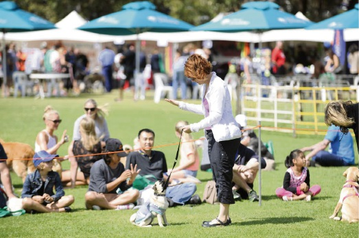 Dogs Day Out Festival returns to Lexcen Park in Ocean Reef.
