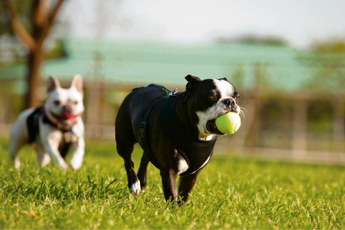City of Wanneroo seeking feedback on Madeley dog exercise area proposal