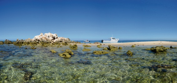 Marmion Marine Park: 30 years protecting sea life
