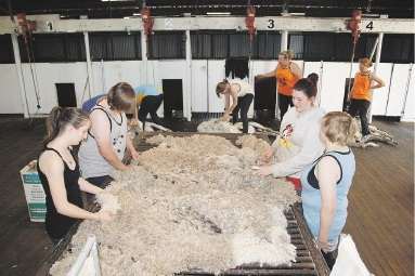 Students gained valuable hands-on experience of shearing and wool-handling.