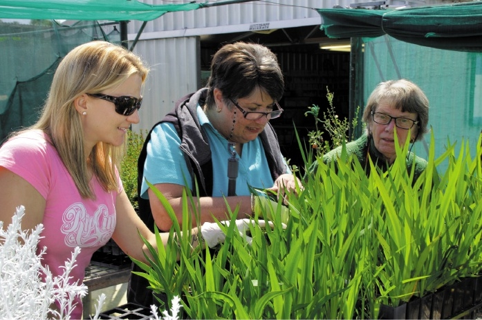 Volunteers prepare to sell waterwise local native plants for as little as $1 to clear stock.