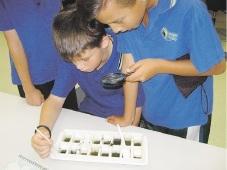 Students Daniel Radeski and Jordan Sandon view macro invertebrates.
