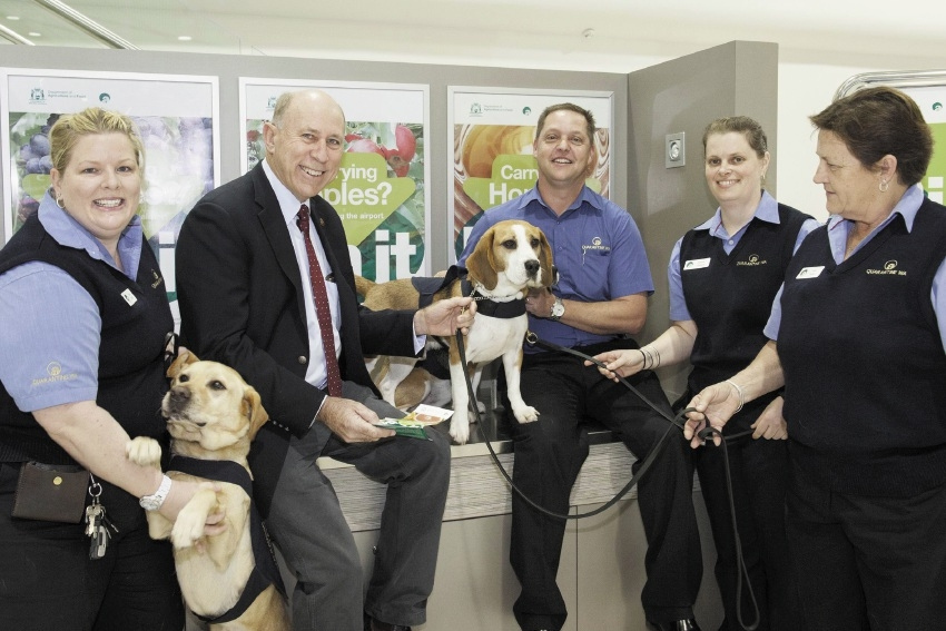 Quarantine detector dogs and their handlers with Agriculture and Food Minister Ken Baston at Perth domestic airport.
