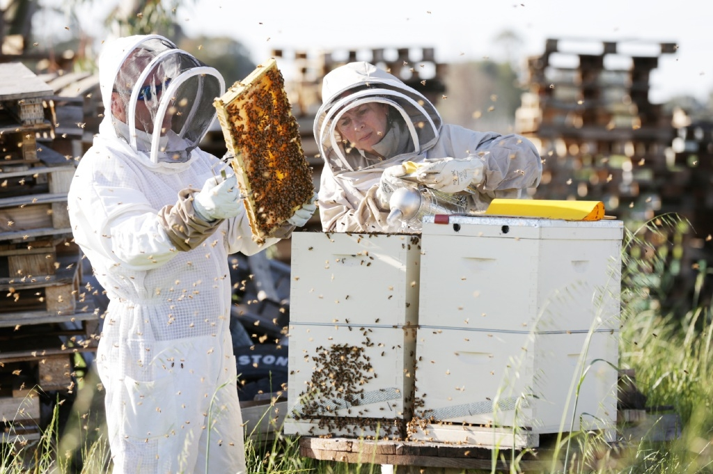 Sas Jacobs and Dave Glossop of Baskerville seen here checking the beehives.  Picture: David Baylis www.communitypix.com.au   d443411