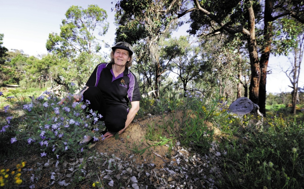 Chittering Visitors Centre worker Sue Carter, of Bindoon, among the wildflowers. Picture: David Baylis www.communitypix.com.au   d443384