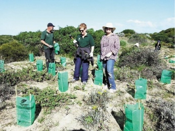 Tree planting volunteers Rudy De Jong, Lynda Shaw and Sandy Taylor from Men of the Trees planting in Singleton.
