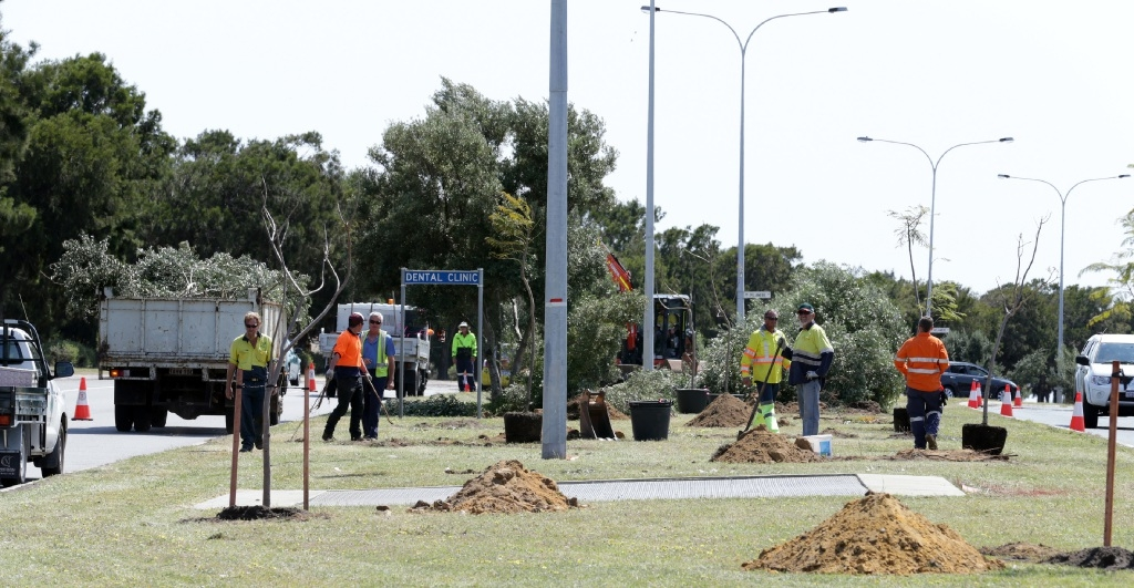 City staff plant the new jacaranda trees.