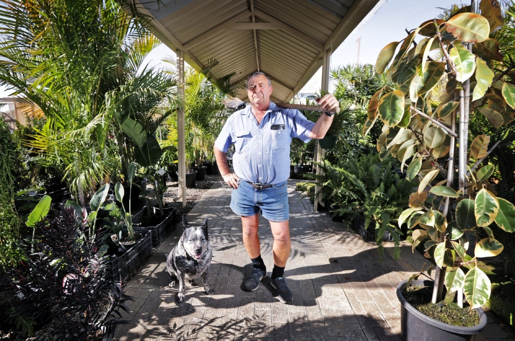 David's Garden Centre owner David Bacchion at his High Wycombe business.Picture: David Baylis        www.communitypix.com.au   d443858