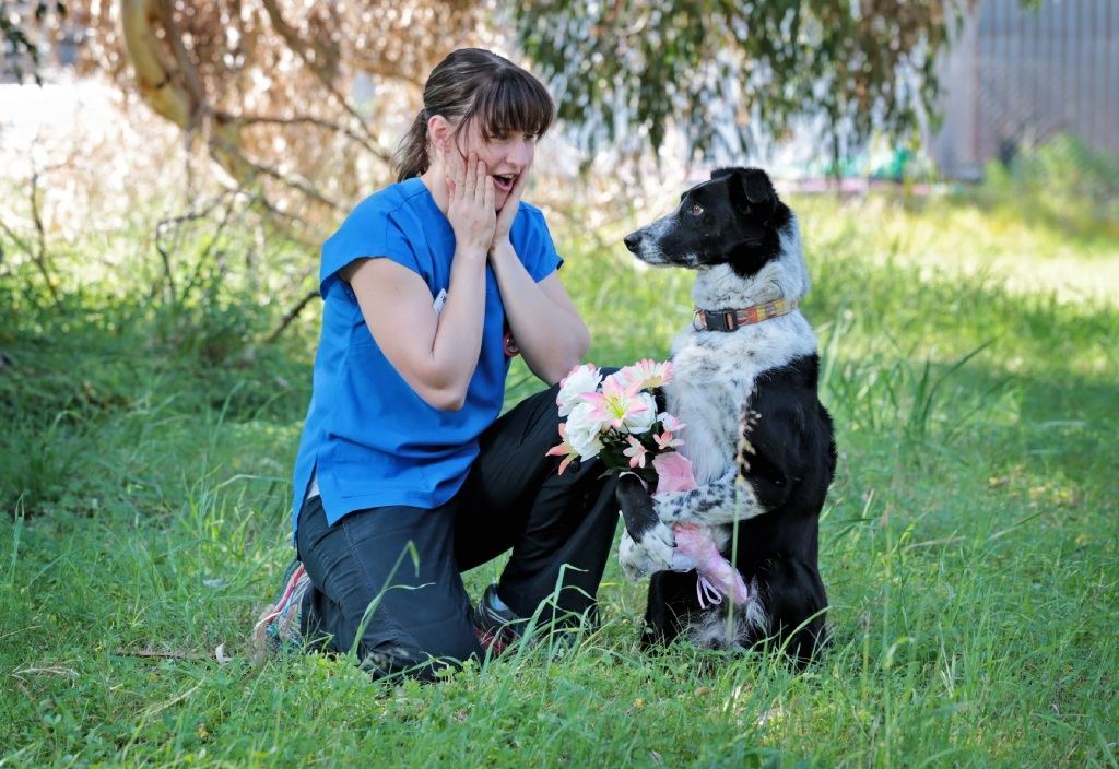 Miriam Gaulton with her 7 year old Border Collie Buzz. Picture: David Baylis d444380