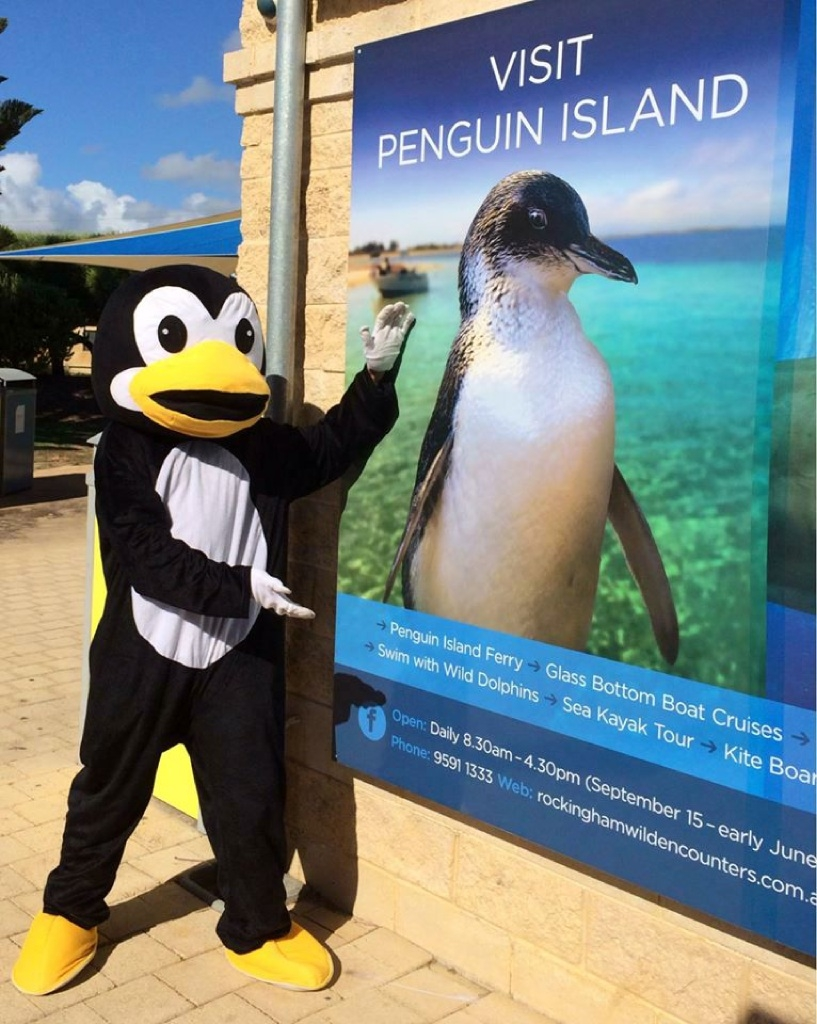 Penguin Island's happy feat: Guinness World Record