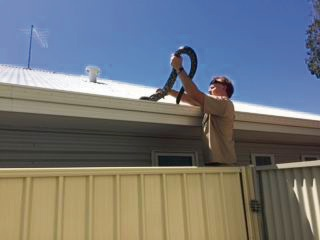 Ravenswood resident surprised by python sunbaking on her fence