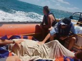 Rescue of oceanic dolphin hailed as big success