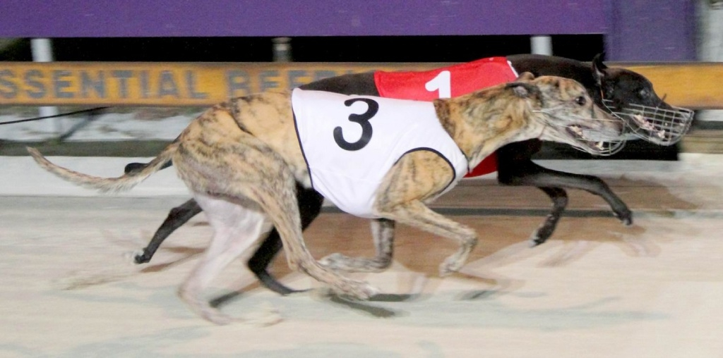 Nero Bolt was the fastest qualifier.Astrophysic.