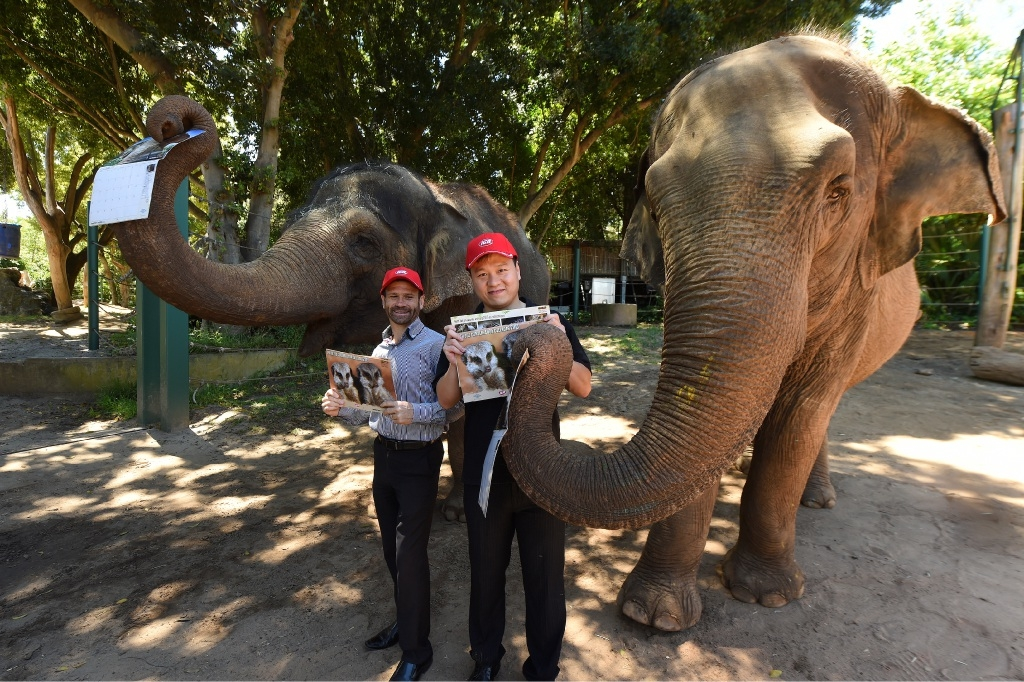 Como IGA staff member Ashley |Cranenburgh and Will Yuan (South Perth Fresh IGA) with zoo elephants Permai and Tricia. Picture: Jon Hewson  d445435