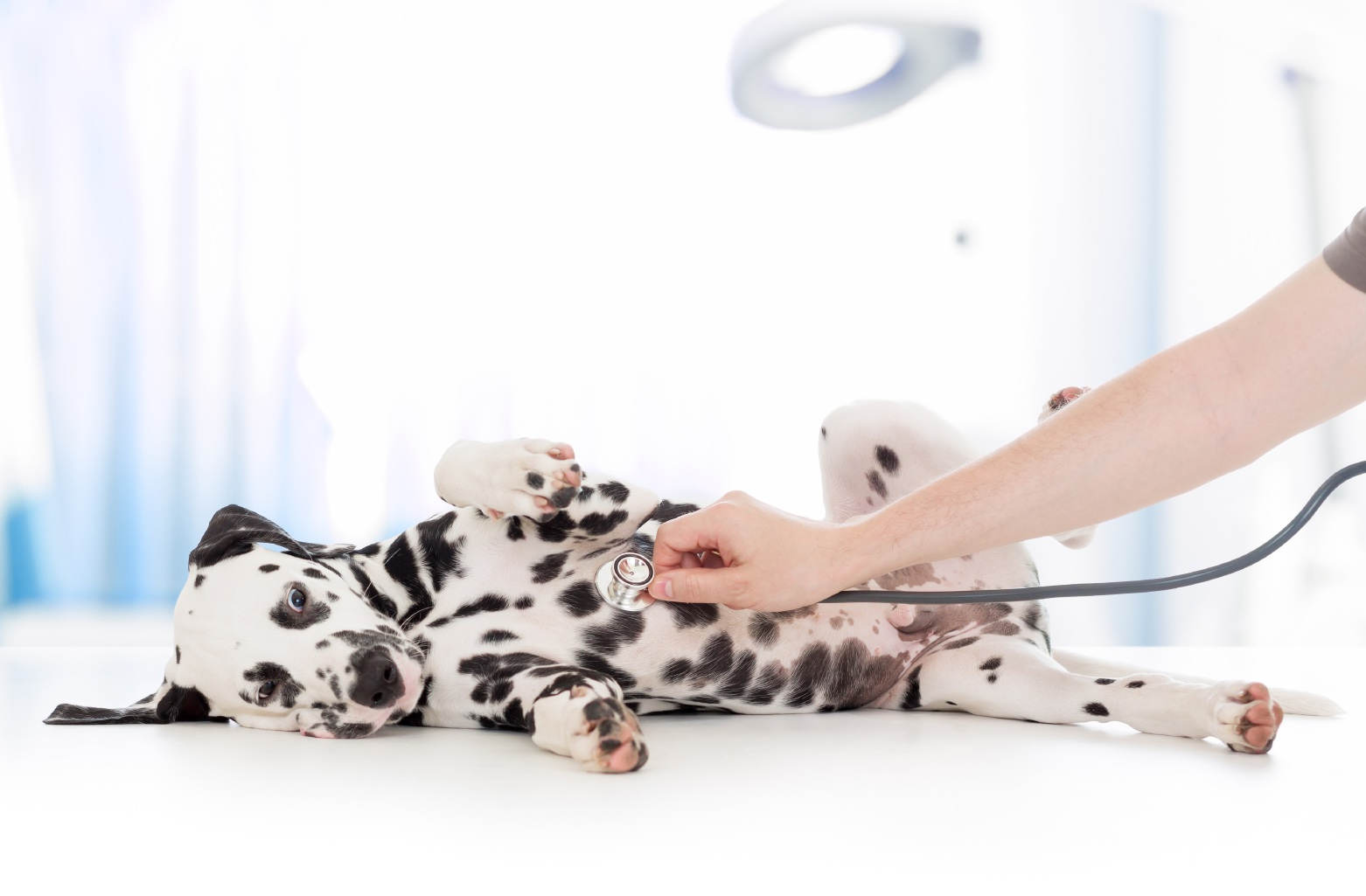 Perth vets warn dog owners against danger of salt paste home remedies