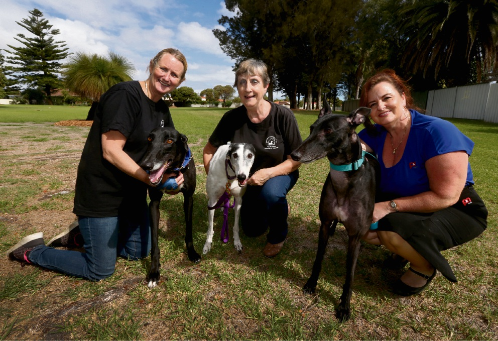 Roz Uren, Toni Donnelly and Laura Richards with greyhounds Macca, Spice and Jargo. Greyhound Adoptions are celebrating a surge in demand for the dogs, but need help with the cost of caring for them. Picture: Matt Jelonek www.communitypix.com.au   d467309
