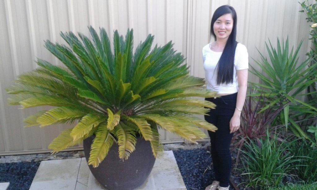 Andrew West's wife Vi Nguyen with the well-travelled plant.