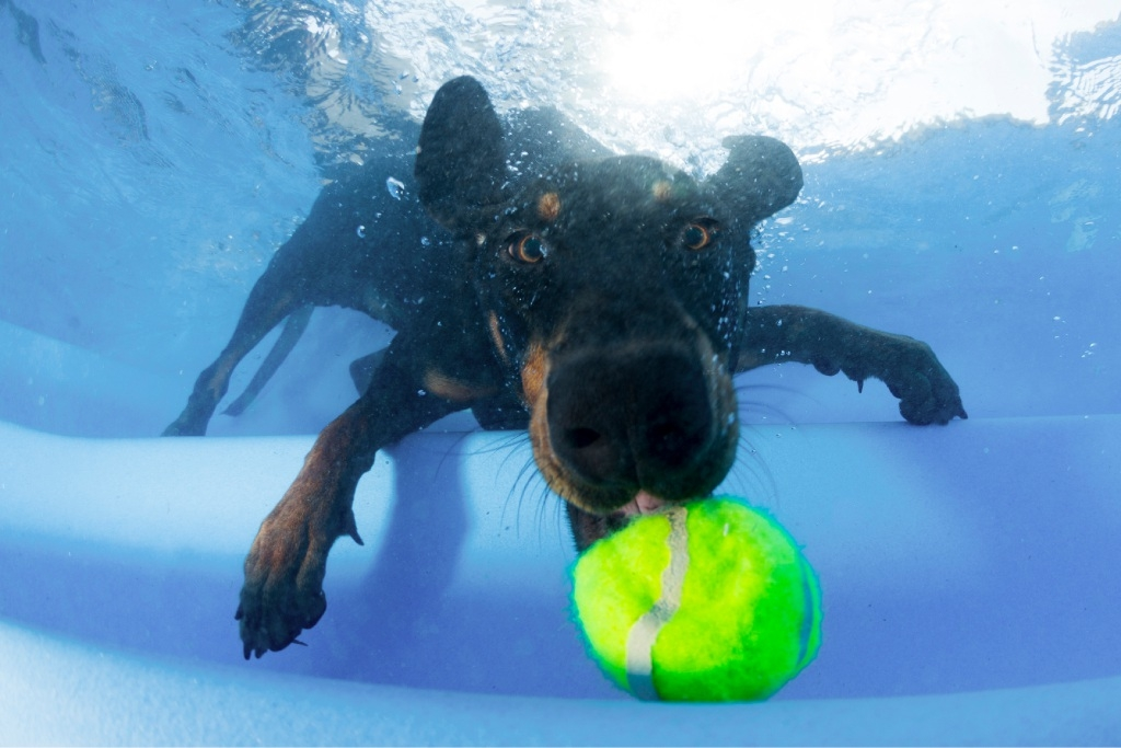 Juke goes for a ball underwater. Picture: Nick Thake