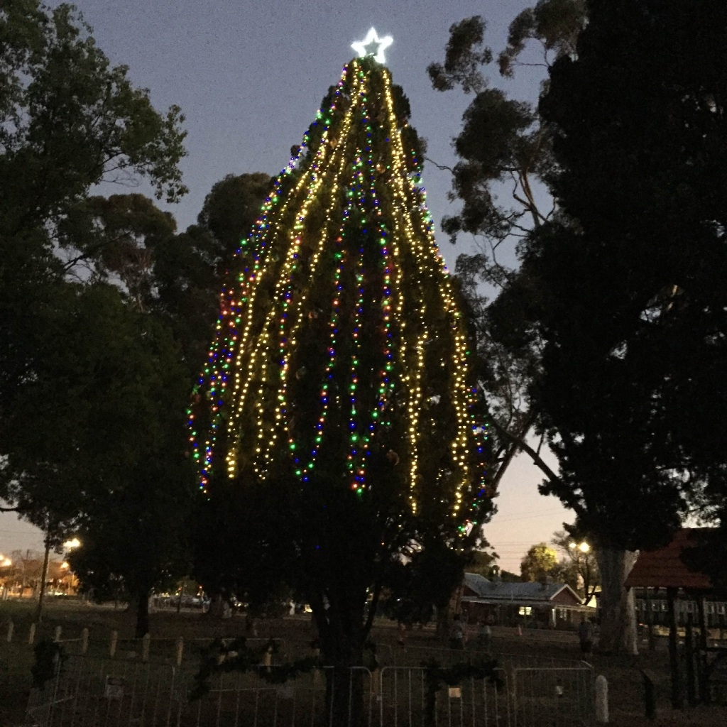 Glowing tree lights up season in Guildford