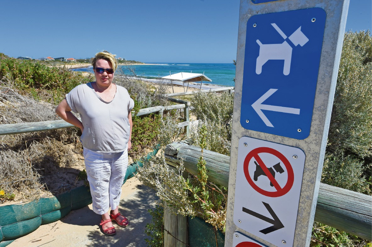 Concerns raised about dog owners' use of Avalon beach