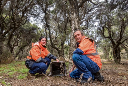 City of Canning natural areas team members  Max Box and Tehlia Gobby setting up a trap in the bush.