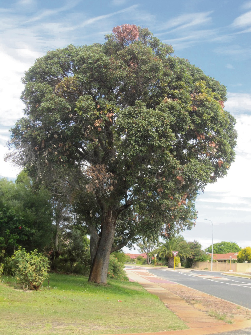 City of Joondalup to plant more trees under Leafy City Program