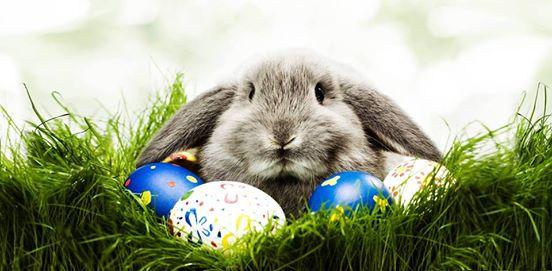 St Leonards Easter Egg hunt on in Dayton