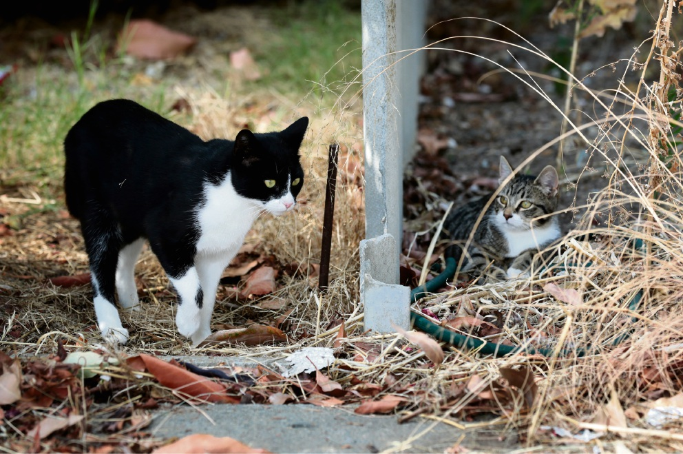 Midland resident wants to find homes for family of abandoned cats