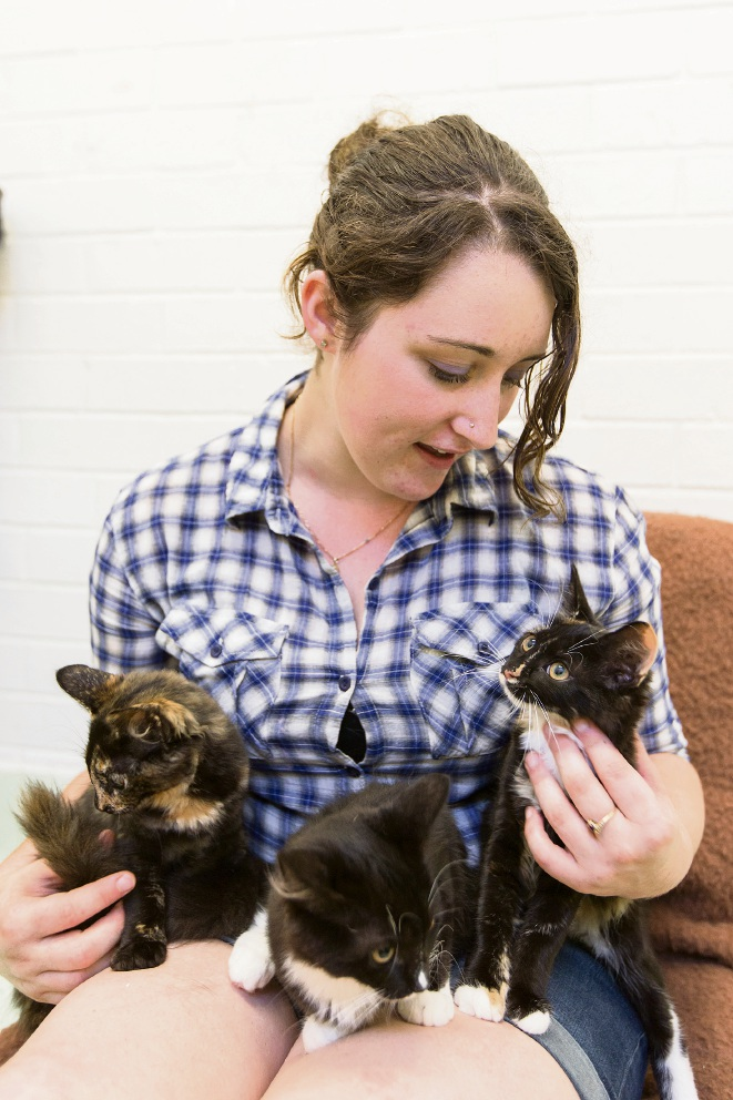 Slowdown in kitten adoptions limits shelter from doing more
