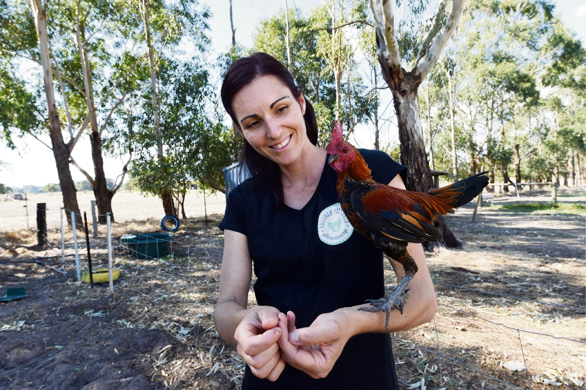 Rachael Parker on her farm with Tiny. Rescued fox Fergi (top) and Piklet and Billy (above). Main picture: Jon Hewson         www.communitypix.com.au   d468088