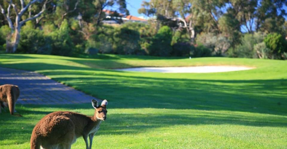Joondalup Resort and Connolly Residents Association information evening