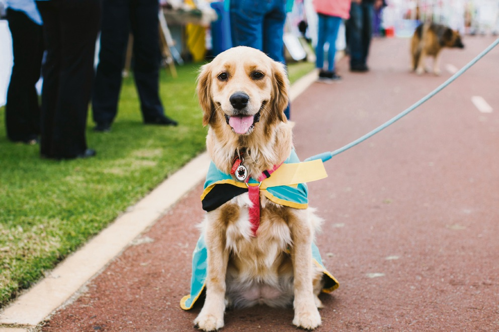 Mundaring to host paw-some RSPCA WA Million Paws Walk event