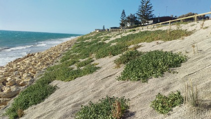 Shire of Gingin to treat Seabird seawall for sea spinach infestation