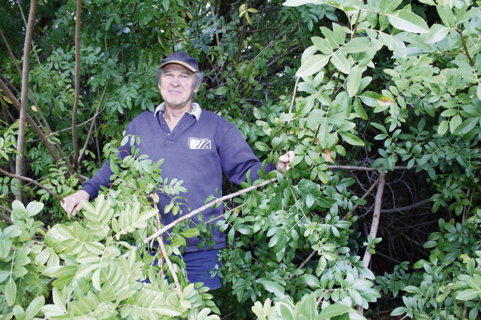 Geoff Barritt on the edge of a large patch of brazilian pepper trees. It used to be mainly wattle trees.